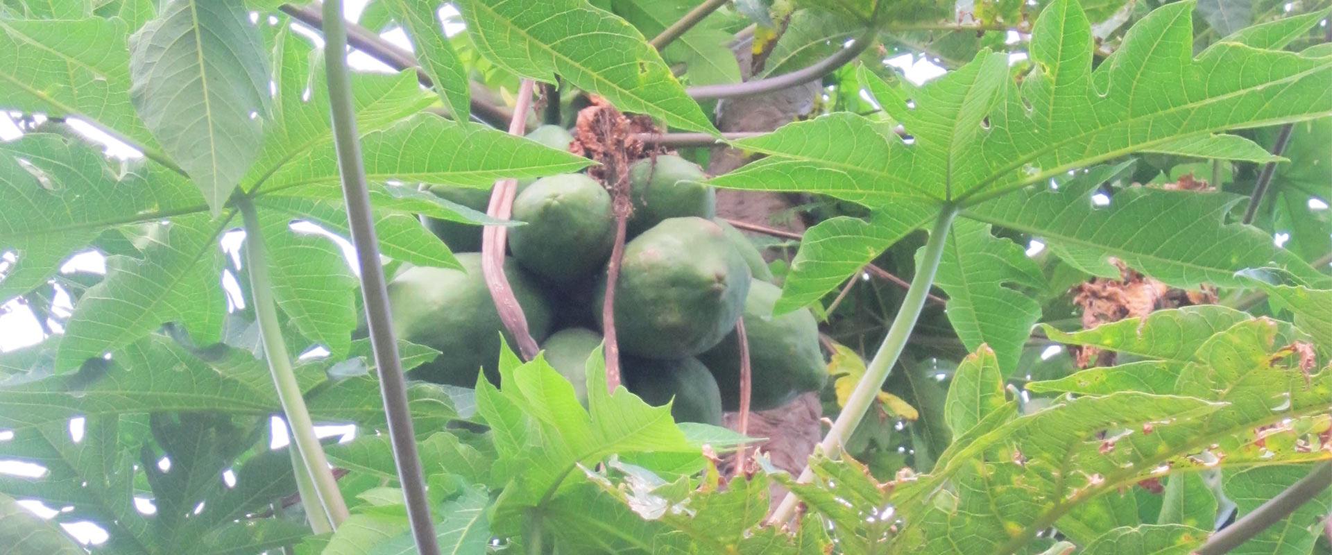fspn-etiopia-alimentacion-cultivos